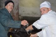 Практичне навчання ветеринарів